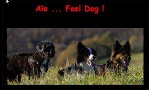 Sandrine Almon, Educateur canin en méthodes amicales et positives dans le Tarn (81)